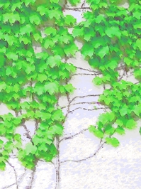 緑のカーテンイラスト1