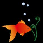 金魚イラスト3